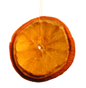 """תפוז יבש- קשר בין תוכנית שיווקית לט""""ו בשבט"""
